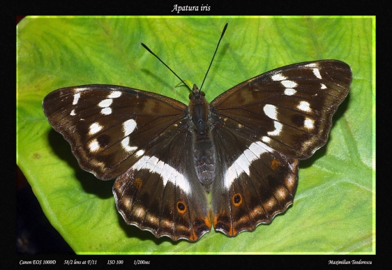 Image result for imagini frumoase cu fluturi de noapte