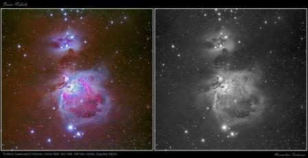 Orion Nebula Q65