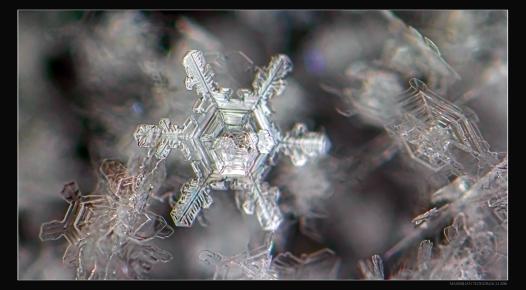 ICESTAR4.jpg