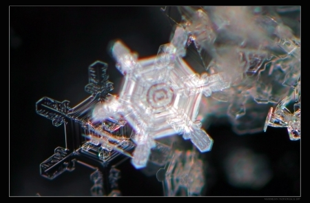 ICESTAR5.jpg