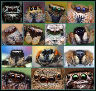Many eyes.jpg