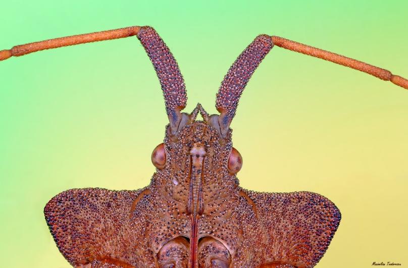 Shieldbug.jpg