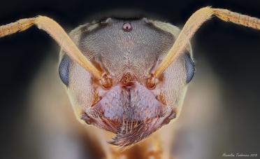 Ant1.jpg
