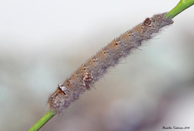 larv1.jpg