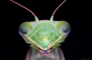 mantis 1.jpg