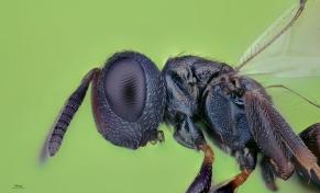 small wasp.jpg