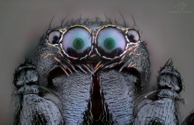 AntSpider.jpg