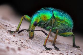 Curculionidae2.jpg
