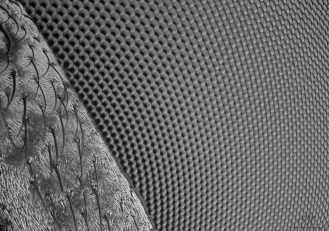 fly eye 5.jpg