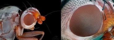 fly eye.jpg