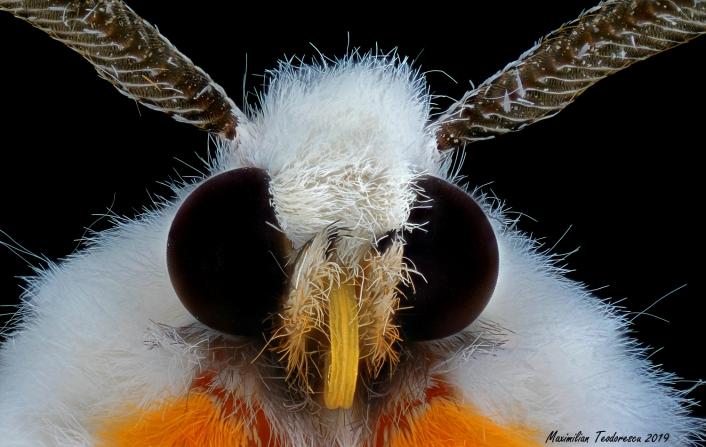 Moth1.jpg