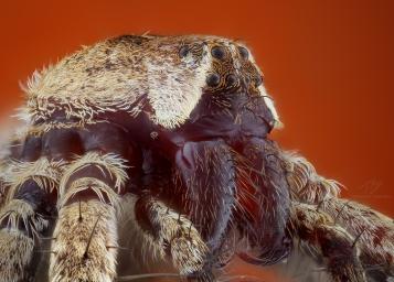Spider look.jpg