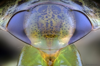 WaterBug.jpg