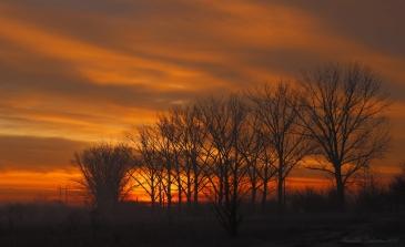 Morning colors4.jpg