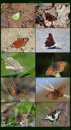 Spring butterflies.jpg