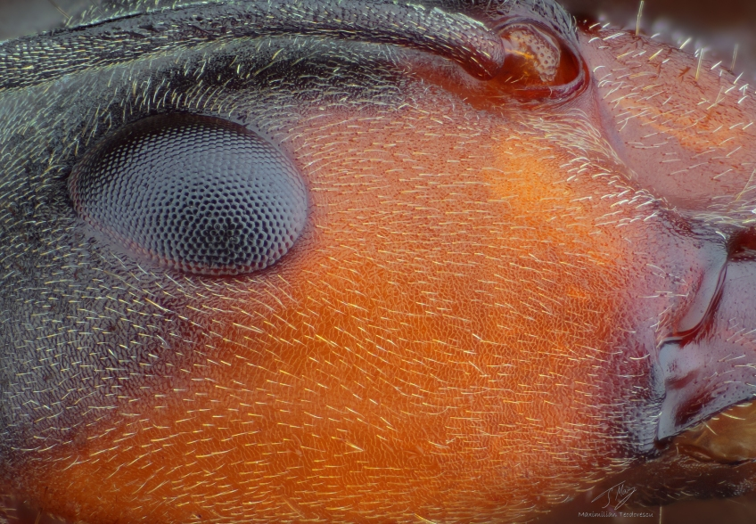 Ant detail.jpg