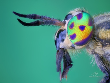 Rainbow eyes b.jpg