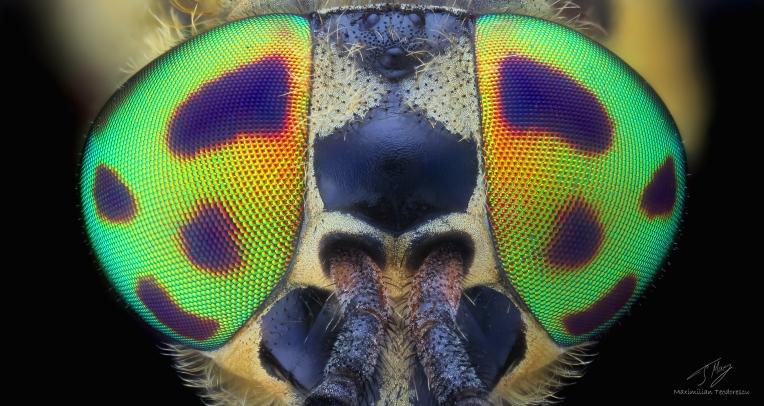Rainbow eyes.jpg