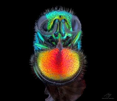 Rainbow wasp b.jpg
