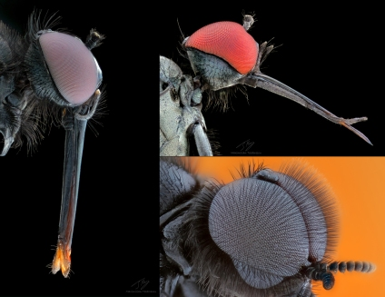 Some flies.jpg