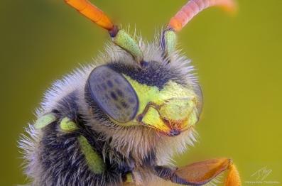 yello wasp.jpg