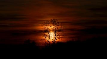 Burning tree.jpg